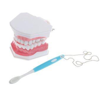 BolehDeals ทันตศึกษาผู้ใหญ่สอนสาธิตรุ่นมาตรฐาน Typodont ฟัน