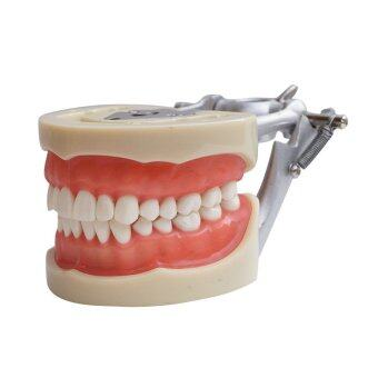 Model Dental Universal Plate 200H Type Removable Teeth - intl