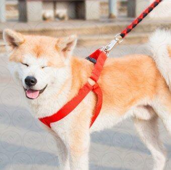 YHL Set 3 ชิ้น สายจูงไนลอน สายรัดหน้าอก และ ปลอกคอสุนัข พรีเมียม - ปลอกคอหมา สายจูงสุนัข สายจูงหมา - Size M (สีดำคาดส้ม) (image 1)
