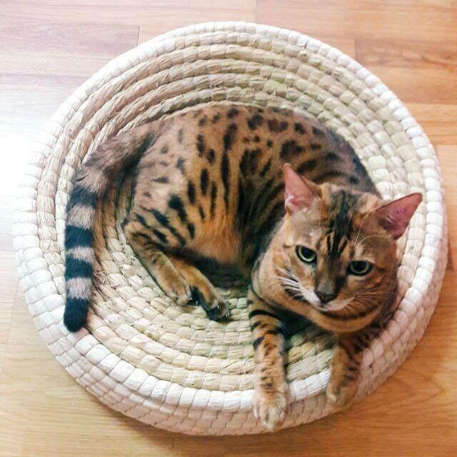 ซื้อ Catholiday ที่นอนฟางข้าวโพด เสืื่อแมว ที่นอนแมว ที่ลับเล็บแมว ที่ฝนเล็บแมว เตียงแมว ของเล่นเเมว ออนไลน์