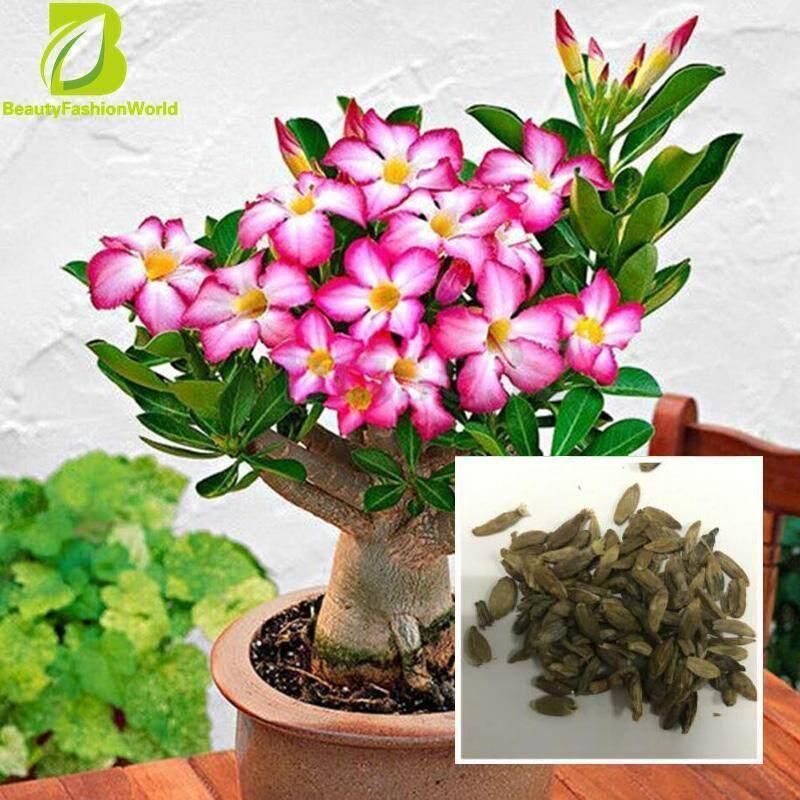 Beautyfashionworld 50 ชิ้น/ถุง Bonsai Adenium Obesum เมล็ดพันธุ์ Desert Rose ดอกไม้ยืนต้น Diy - Intl.