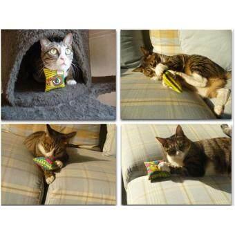 รีวิวพันทิป Cat Accessories ของเล่นแมว หมอนแมวสี่เหลี่ยม ไส้Catnip หลากสีขนาด7.5 CM. 2 ชิ้น