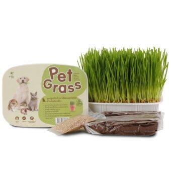 Pet Grassชุดปลูกต้นข้าวสาลีอ่อนออร์แกนิค