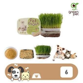 Pet Grassหญ้าปลูก ข้าวสาลี ชุดปลูกต้นข้าวสาลีอ่อนออร์แกนิค สำหรับสุนัข แมวและสัตว์เลี้ยง (6กล่อง)