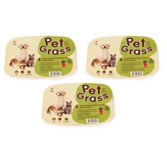 Pet Grassชุดปลูกต้นข้าวสาลีอ่อนออร์แกนิค3ถาด