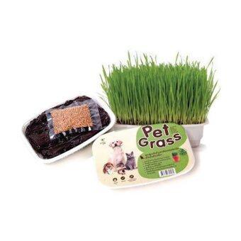 Pet Grass ชุดปลูกต้นข้าวสาลีอ่อนออแกร์นิค