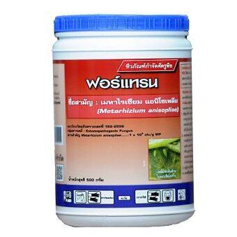THAIGREENAGRO ไทยกรีนอะโกร THAIGREEN SHOP สินค้าการเกษตร ฟอร์แทรน -TM (เชื้อราเขียว เมธาไรเซียม) จุลินทรีย์กำจัดปลวกร้ายในบ้านเรือน เพลี้ยจักจั่น เพลี้ยกระโดดสีน้ำตาบ