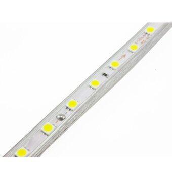 CM Light Tranmere home Light ไฟเส้น LED Strip ยาว 5 เมตร กันน้ำ รุ่น CM-DT-001 - warmwhite (image 2)