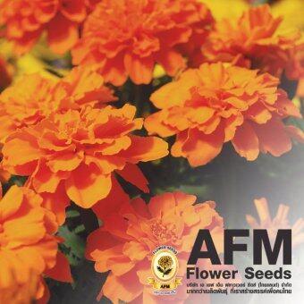 AFM เมล็ดพันธุ์ดอกดาวเรือง ฝรั่งเศส สีส้ม (3 ซอง)