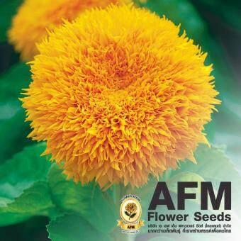 AFM เมล็ดพันธุ์ดอกทานตะวัน ฟู ฟู (3 ซอง)