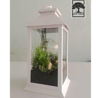 Harga Terrarium the Lamp โคมไฟ