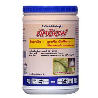 THAIGREENAGRO คัทออฟ -TM ไทยกรีนอะโกร THAIGREEN SHOP สินค้าการเกษตร บิวเวอร์เรีย บาสเซียน่า (Beauversia Bassiana spp) จุลินทรีย์ชีวภาพกำจัดเพลี้ยอ่อน เพลี้ยแป้ง หนอน แมลง)