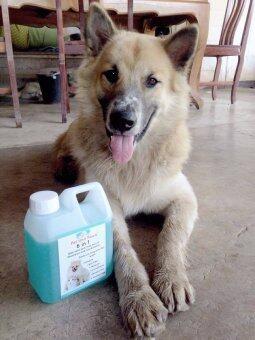 Pet and Paws แชมพูผสมครีมนวดสำหรับสุนัขและแมว สูตรอ่อนโยน บำรุงขนผิว ไม่แพ้ 100% (image 2)