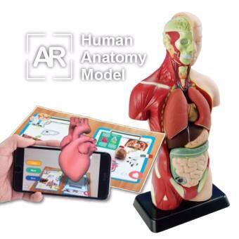 หุ่นจำลองร่างกายมนุษย์พร้อมโปรแกรมภาพ 3 มิติ 27 ซม.