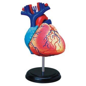 4D Vision หุ่นจำลองหัวใจ 4 มิติ ...