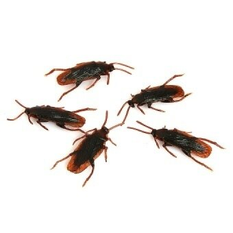 5 PCS Halloween April Fools Day Simulat Cockroach Toy JokeTrickyTools - intl