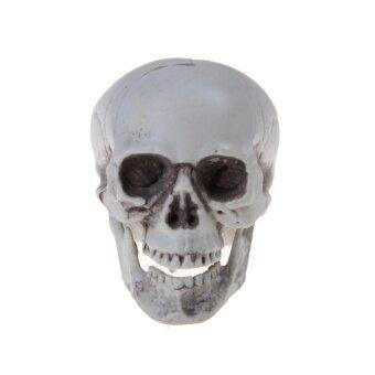 Mini Human Skull Decor Prop Skeleton Plastic Head Halloween CoffeeBar Ornament - intl