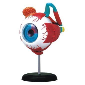 4D Vision หุ่นจำลองตา 4 มิติ