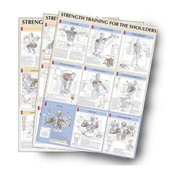 VIVA ชุดโปสเตอร์สีประกอบการเล่นกล้าม จำนวน7แผ่น - Strength Training Anatomy Poster Set