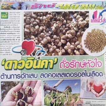 กาแฟถั่วดาวอินคา รสกลมกล่อม กล่องบรรจุ 12 ซอง 6 กล่อง UMB SachaInchi Coffee Mix (image 3)