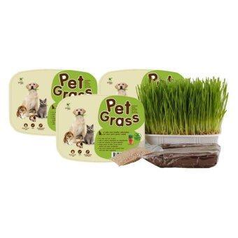 รีวิว Green Pet Grassชุดปลูกต้นข้าวสาลีอ่อนออร์แกนิคสำหรับสัตว์เลี้ยงแพ็ค3ชิ้น