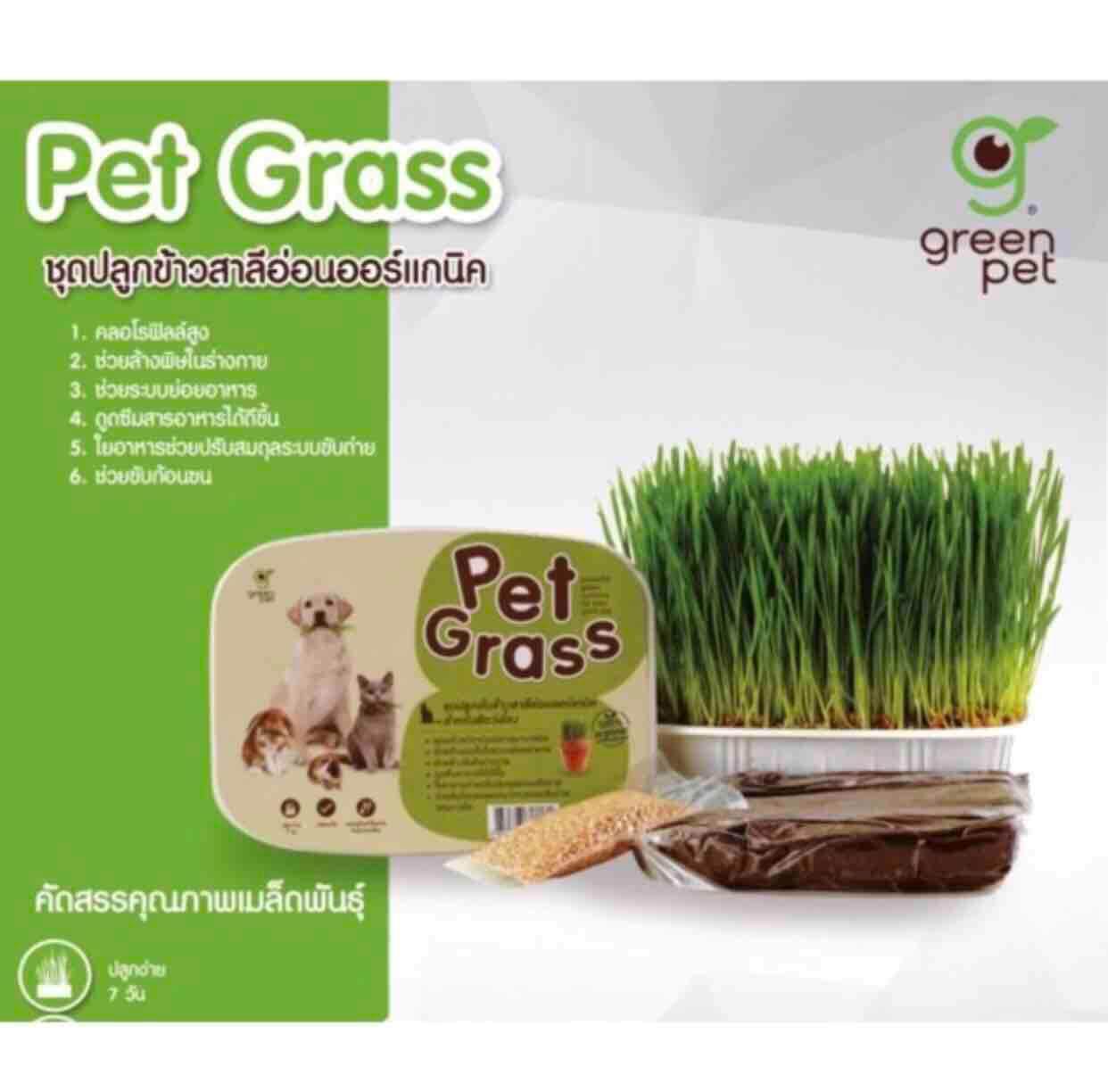 ขายดีมาก! Pet Grass ชุดปลูกข้าวสาลี ออร์แกนิก สำหรับสัตว์เลี้ยง +ส่ง Kerry+